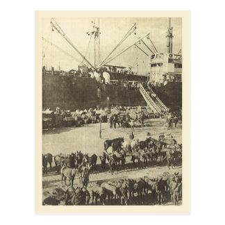 World War I,   Indian troops,  Alexandria Postcard