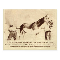 World War I, White horses painted black Postcard