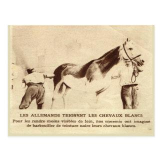 World War I, White horses painted black Postcard
