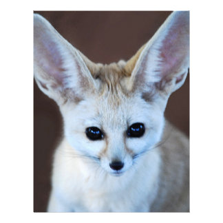 Worlds Cutest Fennec Fox Letterhead