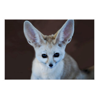 Worlds Cutest Fennec Fox Poster