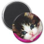 Worlds Cutest Kitten Fridge Magnets