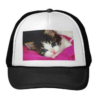 Worlds Cutest Kitten Trucker Hats