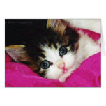 Worlds Cutest Kitten Stationery Note Card