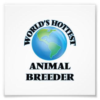 World's Hottest Animal Breeder Photo Print