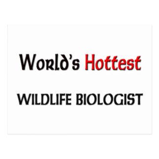 World's Hottest Wildlife Biologist Postcard