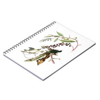 Worm eating Warbler John Audubon Birds of America Notebook