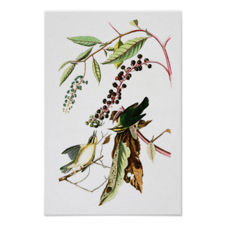 Worm eating Warbler John Audubon Birds of America Poster