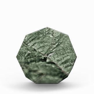 Worn green leaf acrylic award