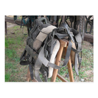 Worn leather horse bridles and bits postcard