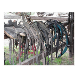 Worn leather horse bridles hanging on wooden fence postcard