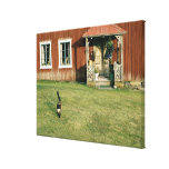 Worn red house with a cat on the lawn. canvas print