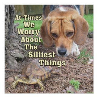 Worried Beagle Dog & Turtle Poster