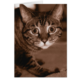 Worried Cat Greeting Card