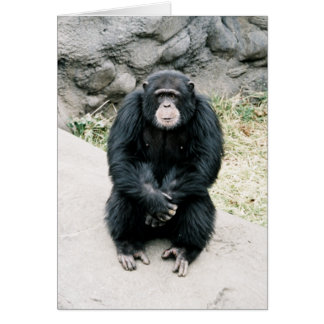 worried chimp 787900-R1-13Azz Card