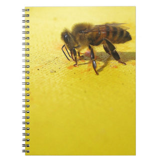 Would You BEE Mine...? Note Book