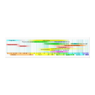 Wound Healing Phases Diagram Gallery Wrap Canvas