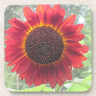 Wowee Sunflower Coaster!