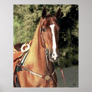Wrangler Horse Poster