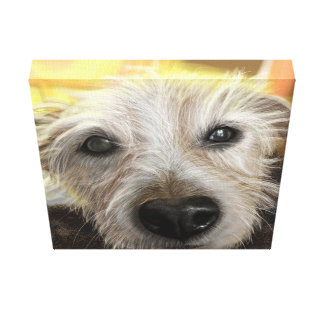 Wrapped canvas 12x12 Jack Russel dog