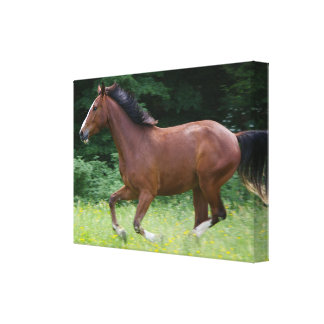Wrapped Canvas Brown Horse galopping