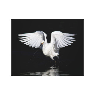 Wrapped Canvas - Snowy egret wings