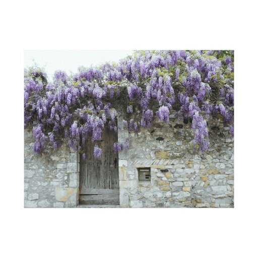 WRAPPED CANVAS - Wisteria at Viviers France Stretched Canvas Print