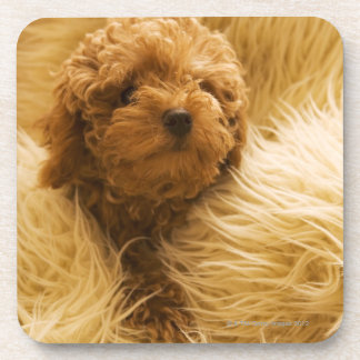 Wrapped up Poodle Drink Coaster