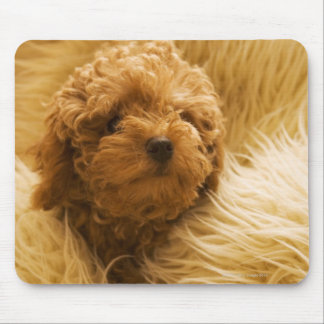 Wrapped up Poodle Mouse Pad