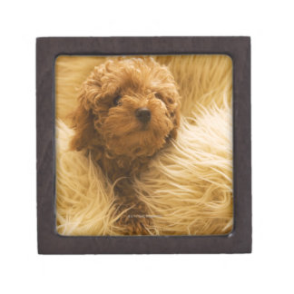 Wrapped up Poodle Premium Keepsake Box
