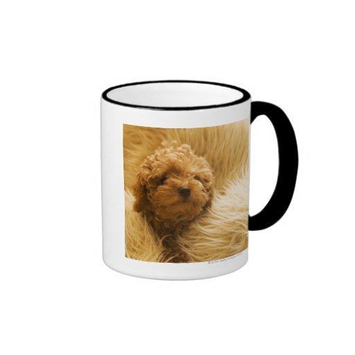 Wrapped up Poodle Ringer Coffee Mug
