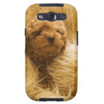 Wrapped up Poodle Samsung Galaxy SIII Cover