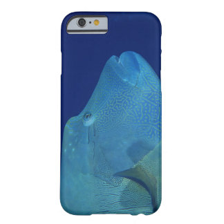 Wrasse 2 de Humphead Funda Barely There iPhone 6