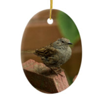 Wren bird ceramic ornament