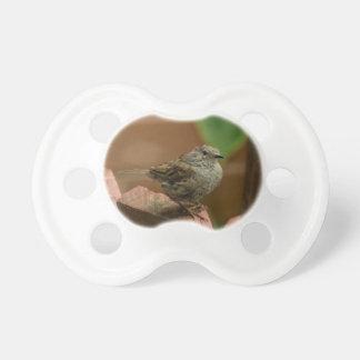 Wren bird pacifier