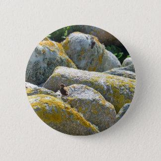Wren Button