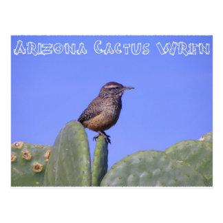 Wren de cactus de Arizona Postales