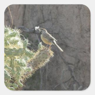 Wren de cactus calcomanía cuadradase