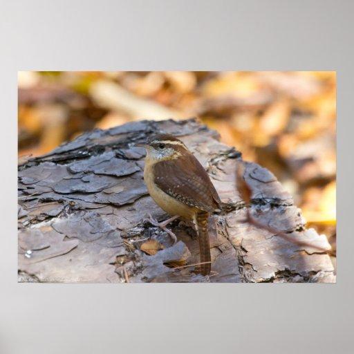 Wren de Carolina en el poster del bosque del pino
