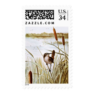 Wren de pantano longirrostro envio