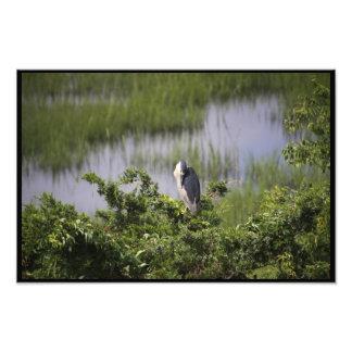 Wren in the Marsh Photo Art