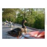 Wrenbury Duck Llangollen Canal Notecard Cards