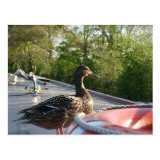 Wrenbury Duck Llangollen Canal Postcard
