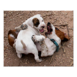 Wrestle Playing American Pit Bull & Basset Hound Poster