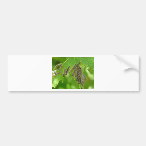 wriggling caterpillars bumper stickers