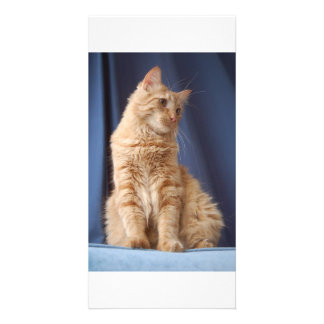 Wrigley in blue photo card