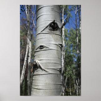 Wrinkled Colorado Aspen Tree Poster