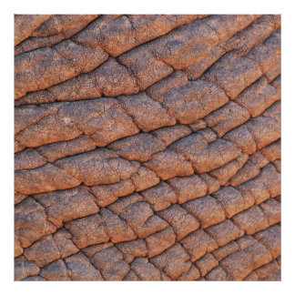 Wrinkly Elephant Skin Texture Template Photo Print