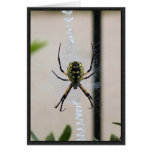 Writing Spider Greeting Card