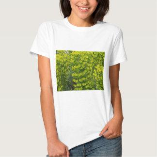Wulfenii de los characias del euforbio camisas